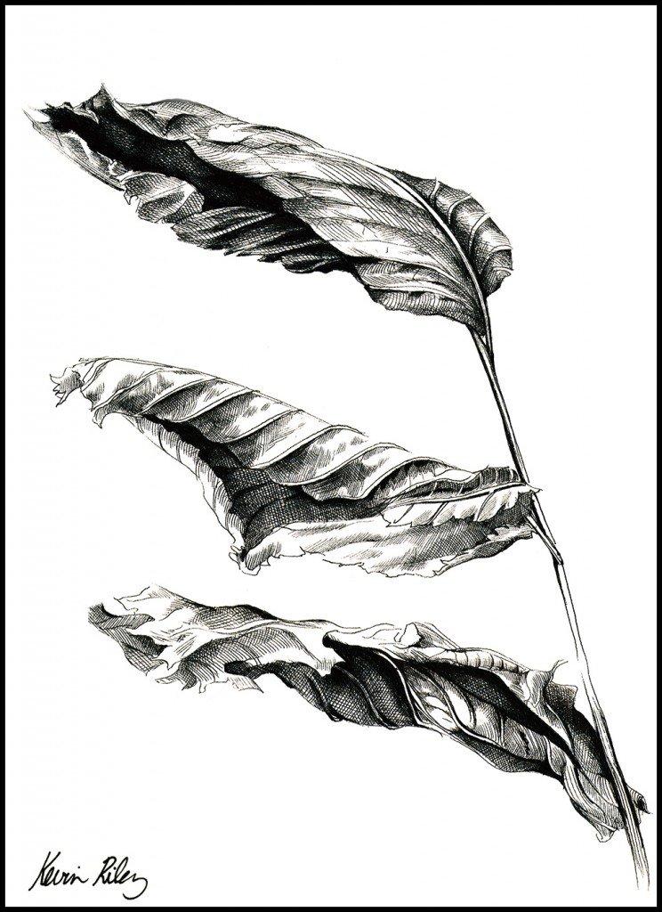Life_of_Dead_Leaf_Large